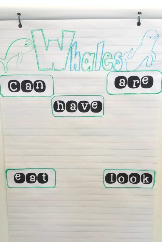 whale fact anchor chart