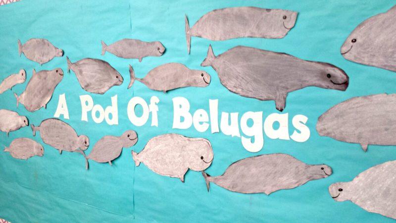 pod of beluga whales art activity