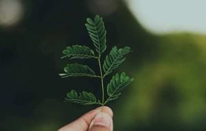 Stile di vita ecosostenibile per salvare la natura