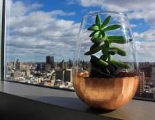 Bicchiere riutilizzato come vaso