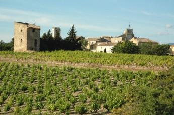 Vignoble à Buisson (Vaucluse).