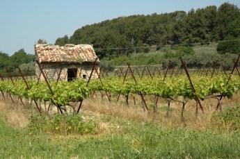 Cabanon de vigne. Mallemort (Vaucluse).