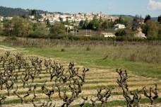 Coteaux de Pierrevert en hiver (Alpes-de-Haute-Provence).