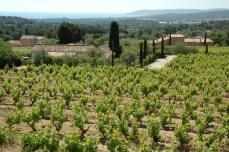 Vignoble à Saint-Tropez (Var).