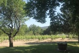 Luberon Vines