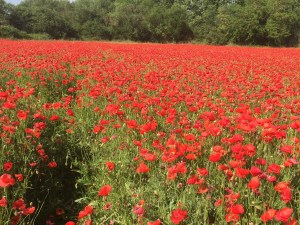 Provence Small Group Tours