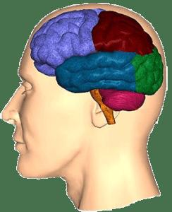 лобных долей мозговой коры