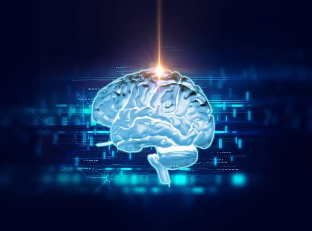 механизмы эмпатии в головном мозге