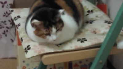 摂理猫20141106