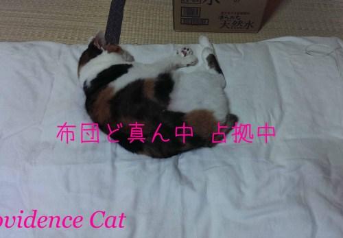 摂理猫201501251