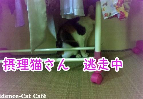 摂理猫 逃走中