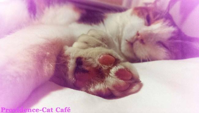 摂理猫メモリー23
