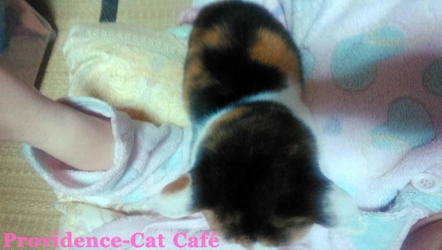 摂理猫メモリー108
