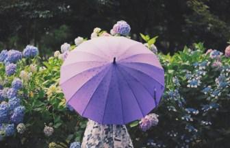雨 傘 女の子 あじさい