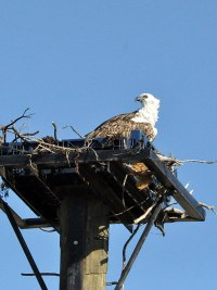 osprey-childrens-park-12-10-14