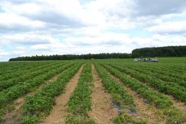 Група компаній «Данон» в Україні розпочинає співпрацю з полуничними сімейними фермами у Тернопільській та Львівській областях