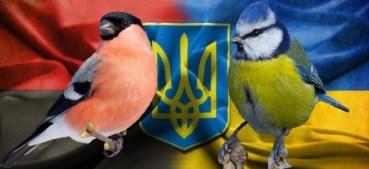До великого зимового обліку птахів може приєднатися кожен українець