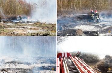 У Тернополі масштабно горіла лісопосадка
