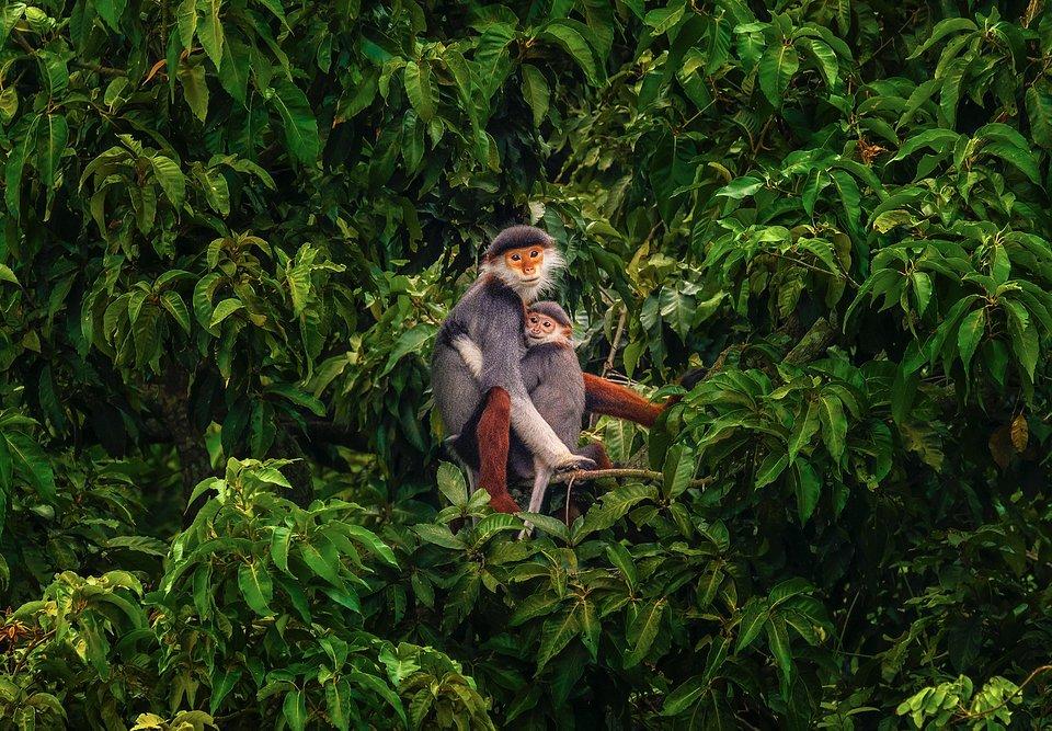 Smiling monkey faces (Khánh Phan/AGORA images)