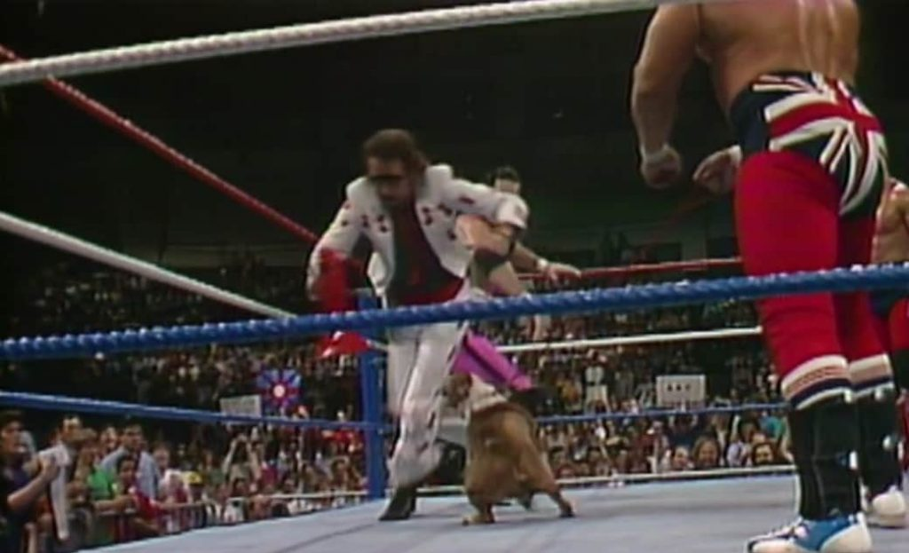 British Bulldogs mascot, Matilda, gets her revenge on Jimmy Hart and his Megaphone! Saturday Night's Main Event, May 2nd, 1987.