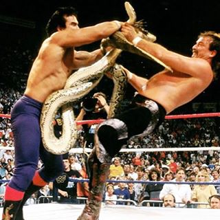 Jake the Snake and Ricky Steamboat's wrestling animals tangling up in the ring