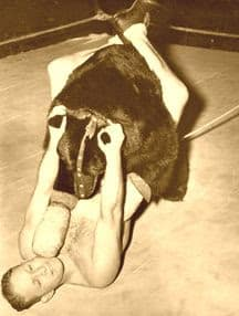 Ted the wrestling bear wearing a muzzle in a match on top of the wrestler