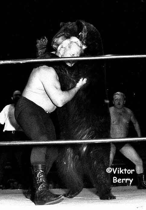 Ted the wrestling bear in the match wrestling looking like he just wants to hug