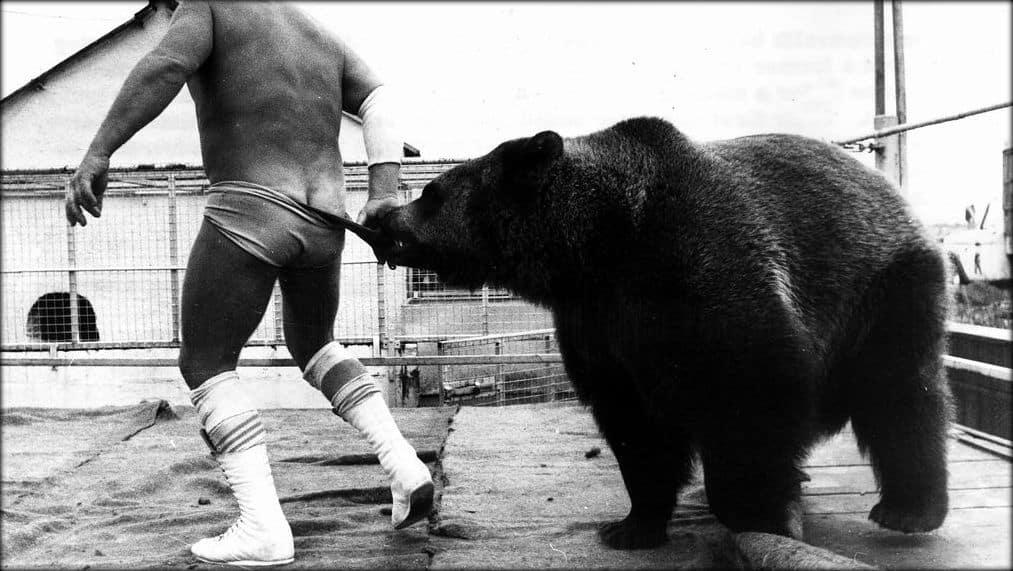 A wrestling bear pulls down a wrestler's wrestling trunks in the ring