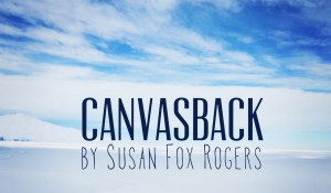 Canvasback, by Susan Fox Rogers