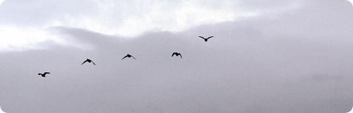 six birds - cropped