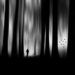 """The forest"" - Miguel Cabezas - 111014"