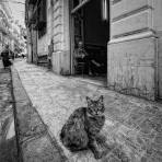 """El gato"" - Frederic Garrido Vilajuana - 301015"