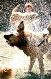 Cómo bañar un perro