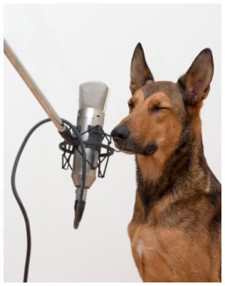 Los perros podrían comprender más de 200 palabras