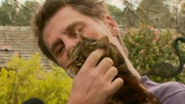 Una gata salvó a su dueño de un incendio