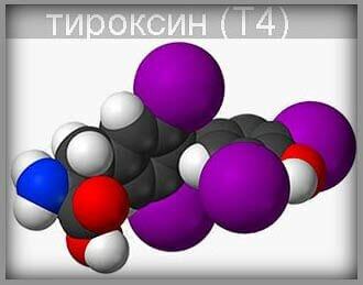Тироксин (Т4) - гормон щитовидной железы