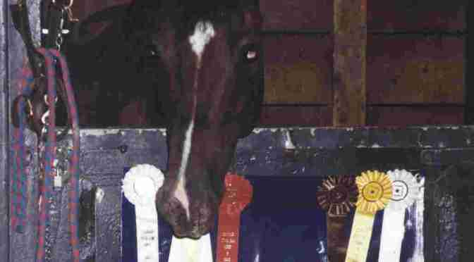 'Dell' was a winner, and not just because he won ribbons