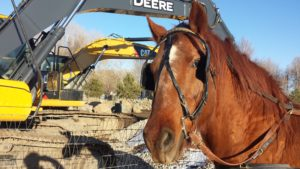 Billy versus the excavator - near property border with Pateros Creek homes - city Poudre River work project.