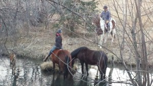 Cayla Stone - mustang mares - water obstacle - pond - Poudre River Stables - Ft. Collins - Colorado - 80521
