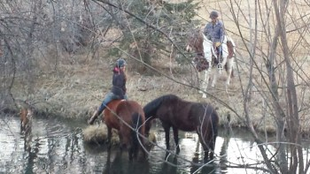 Mustangs in the pond - Cayla Stone - mustang mares - water obstacle - pond - Poudre River Stables - Ft. Collins - Colorado - 80521