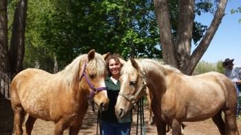Golden girls - Karin Livingston - Palomino Morgan mares - Sandy - Stardust - Poudre River Stables