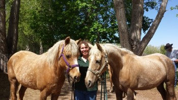 Golden girls - Karin Livingston - Palomino Morgan mares - Sandy - Stardust - Poudre River Stables