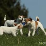 dogphotos_009