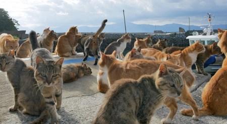「猫島」の画像検索結果