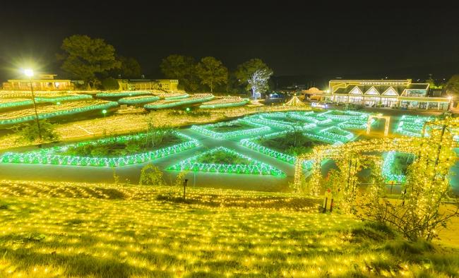 冬の眠りについたバラに、妖精たちが魔法を かけ、光り輝くシャンパンゴールドの花畑を つくりました。