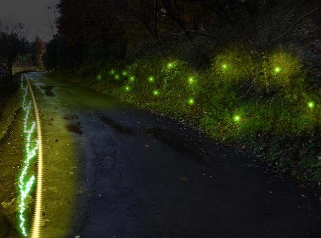 山の斜面にふわりふわりと灯るホタルの光。 遠く輝くイルミネーションをみながらゆったり お散歩できます。