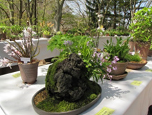 初夏の高山植物展 イメージ