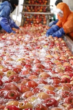 津軽のりんごのみを 贅沢に使って仕込む。