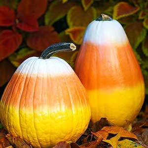100 No Carve Pumpkin Decorating Ideas Prudent Penny Pincher