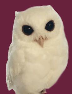 w-owl